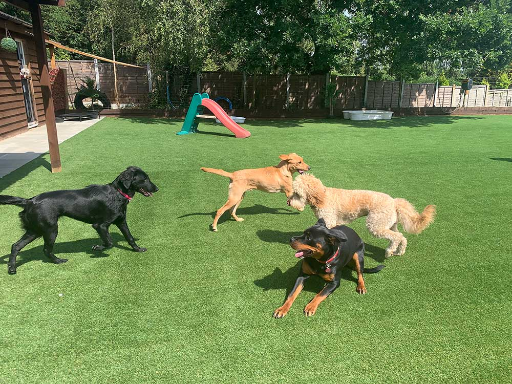 Dogs playing in daycare near Basildon, Essex
