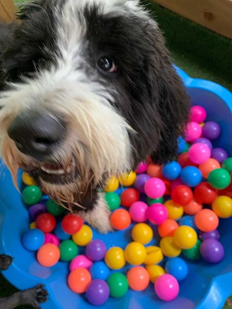 Creche for puppies Basildon, Essex